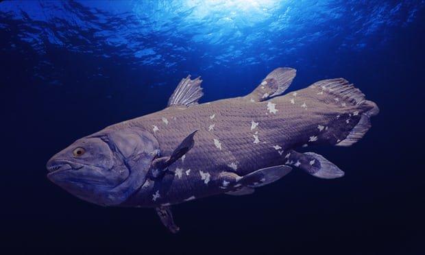 خطر انقراضِ کمیاب ترین ماهی جهان به دلیل حفاری نفتی
